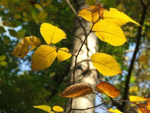золотая осень-3: сентябрь 2007