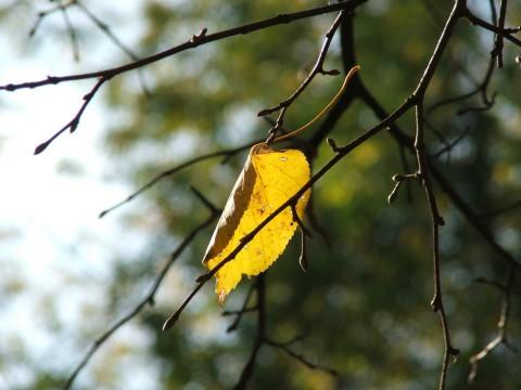 золотая осень-5: сентябрь 2007