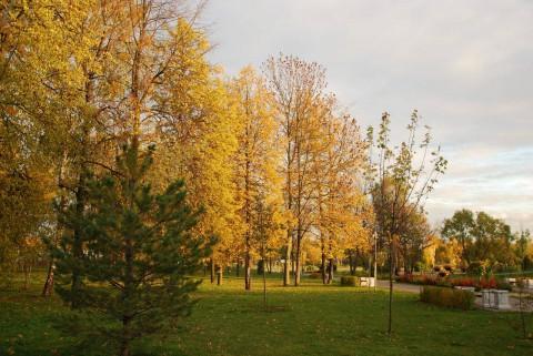 золотая осень-6