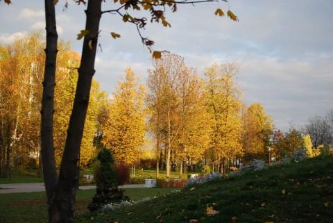 золотая осень-7