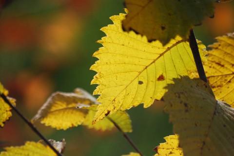 золотая осень-8