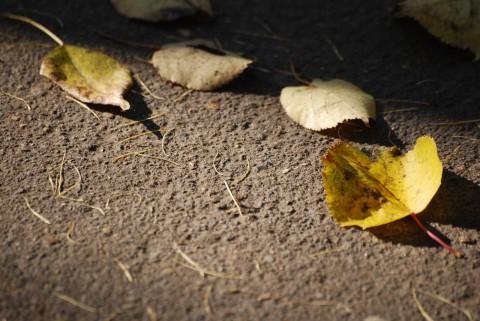 золотая осень-9