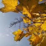 И ветер в листьях шелестит