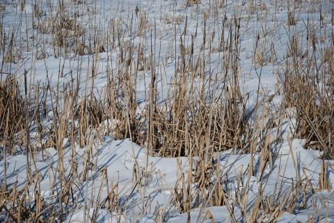 заболоченные берега зимой