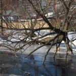 Дерево над водой