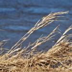 Жухлая трава