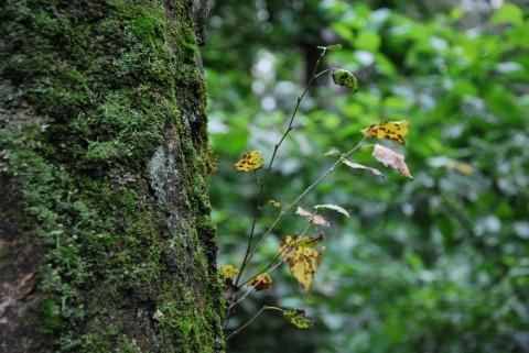 зелень леса