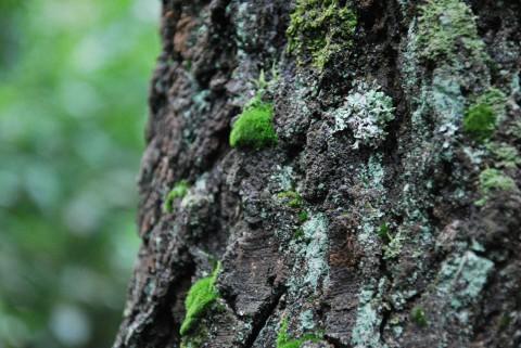 ствол старого дерева