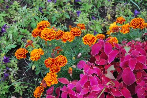 малиновый и оранжевый