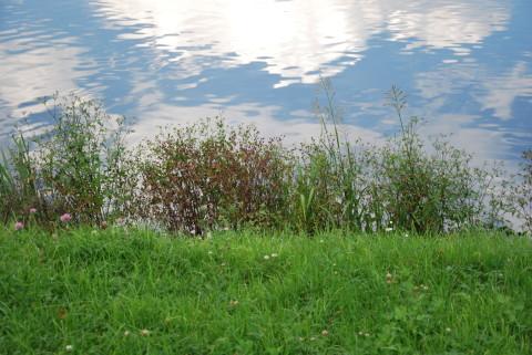 трава на берегу и облака в реке