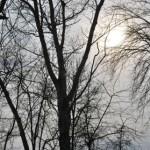 Ветки на фоне Солнца