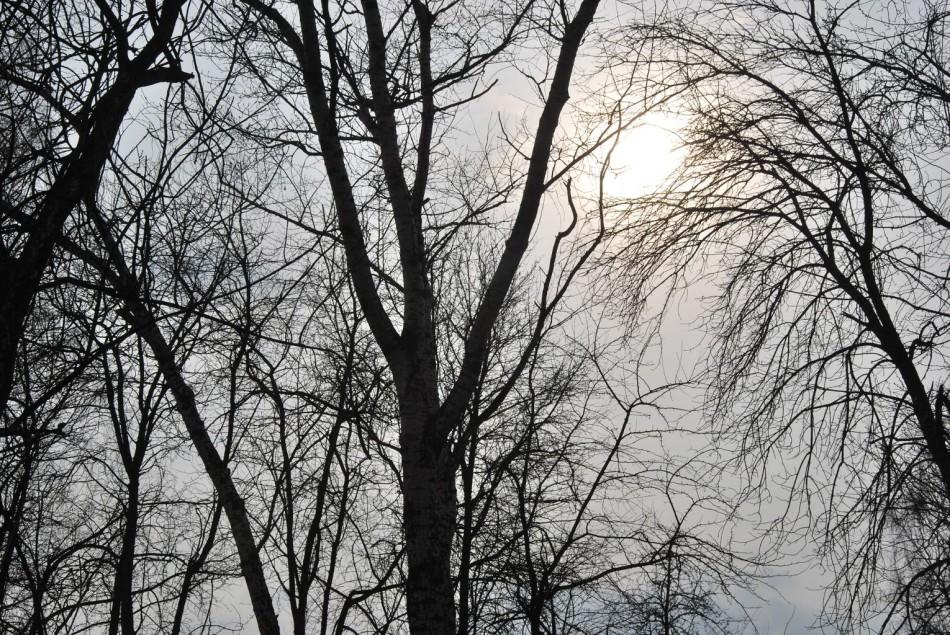 деревья в ожидании апреля