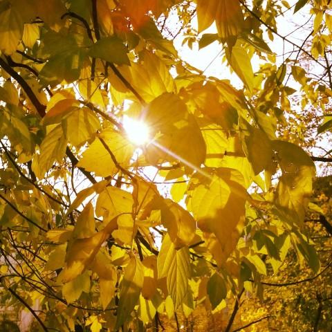 свет сквозь листья