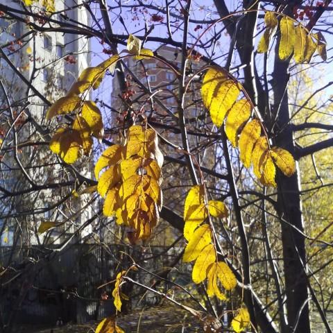 листья на просвет