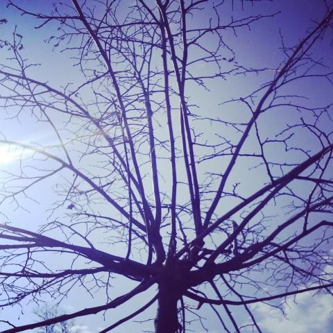 дерево в марте